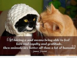 having a Joul meand being able to feel 