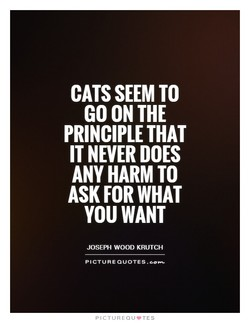 CATS SEEM TO 