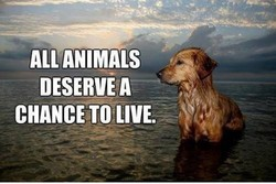 ALL*ANIMALS DESERVE A CHANCE TO LIVE.