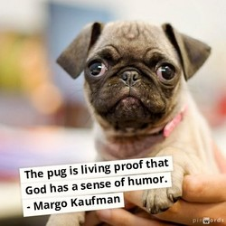 The pug is living proof that 