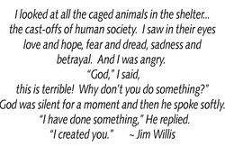 I looked at all the caged animals in the shelter.. 