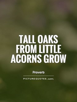 TALL OAKS 