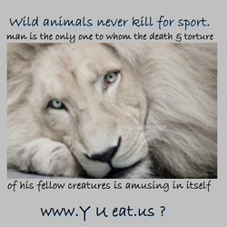 WtLd animals never VetLL for sport. 