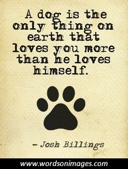A dog is the 