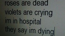 OSes are dead 