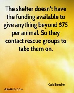 The shelter doesn't have 