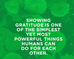 SHOWING 