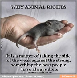 WHY ANIMAL RIGHTS 