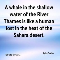 A whale in the shallow 