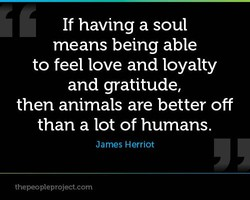 If having a soul 