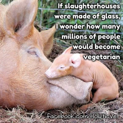 If slaughterhouses 
