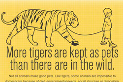 More tiaers are kept as pets than tfiere are in the wild, Not all animals make good pets. Like tigers, some animals are impossible to