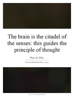 The brain is the citadel of 