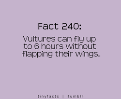 Fact 240: 