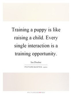 Training a puppy is like 