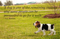 dog isoqe of theremaining rea 