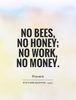 NO BEES, 