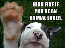 HIGH FIVE IF 