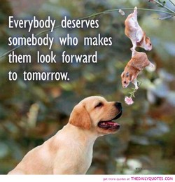 Everybody deserves somebody who makes them look forward to tomorrow. at THEDAILYQUOTES.COM