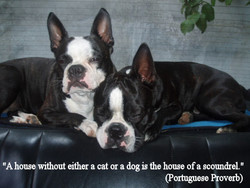 house without either a cat or a dog is the house ofa scoun&el. 