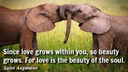 Since love grows within ou,kso beauty 