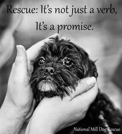 Rescue: It's not just a verb, 