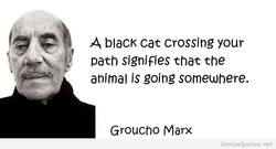 A blacK cat crossing your 