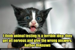 I think animal testing is a terrible 
