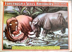 FOREPAUGH&SELLS BROTHERS 