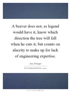 A beaver does not, as legend 