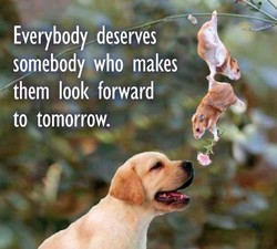 Everybody deserves 