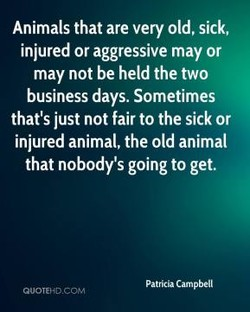 Animals that are very old, sick, 