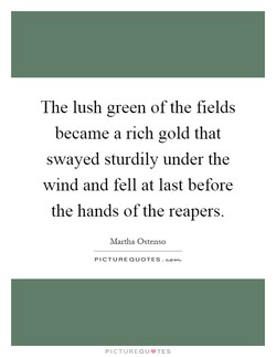 The lush green of the fields 