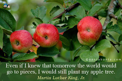 Even if I knew that tomorrow the world would 