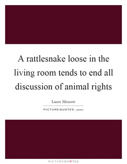 A rattlesnake loose in the 