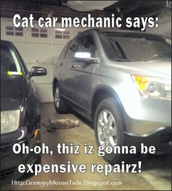 Cat car mechanic says: 