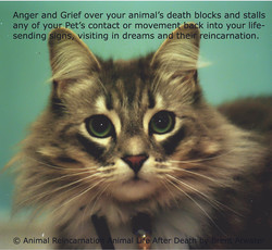 Anger and Grief over your animal's death blocks and stalls 