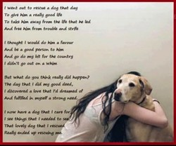 t went out to rescue a dog day 