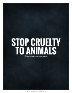 STOP CRUELTY 