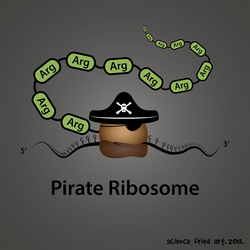Arg 