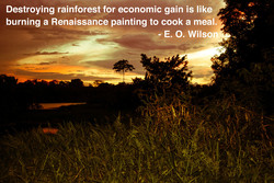 Destroying rainforest for economic gain is like 