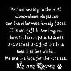We Sind beauty (n the most 