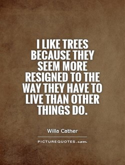 I LIKE TREES 