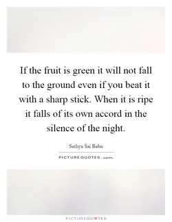 Ifthe fruit is green it will not fall 