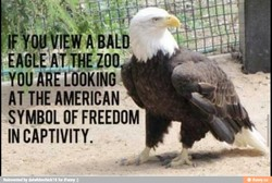 ZOO 