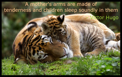 arms are made o 