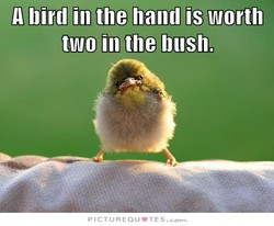 A bird in the hand is worth 