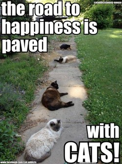 the rpadY 