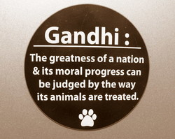 Gandhi : 
