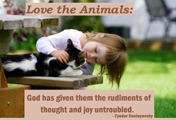 the Animals: 